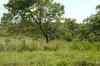 Property For Sale in Uvongo, Uvongo